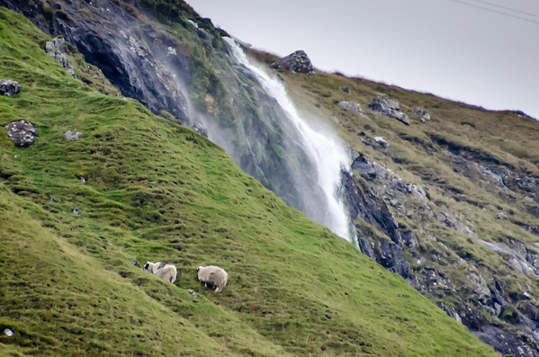 Sheep and Waterfall