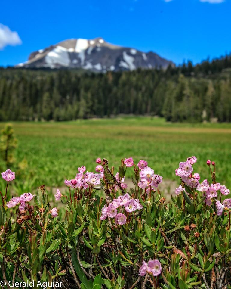 Kings Creek Flowers