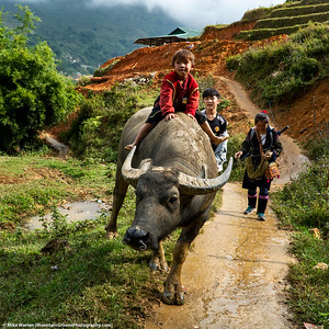 #9 - Outside Sa Pa, Vietnam.  A little boy rides a water buffalo.