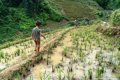 ##8A and 8B – Outside Sa Pa, Vietnam.  A little boy sans  pants tries to keep up with his slightly older playmates, amongst the rice paddies of the northern part of Vietnam, near the Chinese border.
