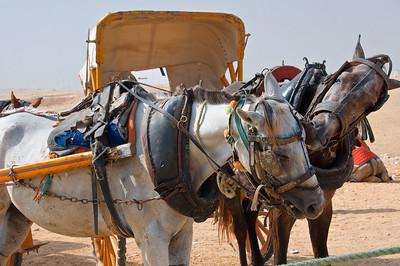 2009-10 Egypt-0086