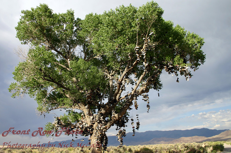 """It's a shoe tree.<br /> Get it? Some """"A"""" hole cut this down in 2010. WHY?"""