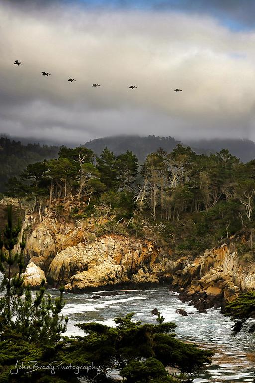 Pelicans Over Cove at Point Lobos California - - John Brody Photography - JohnBrody.com