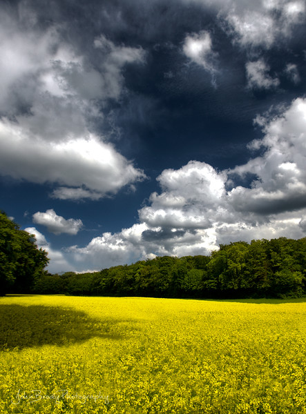 Yellow Fields Under Cloud Cover in Luxembourg near the Roman Ruins - JohnBrody.com / John Brody Photography
