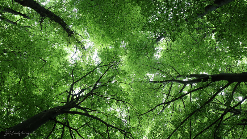 Simple snap... The tree canopy you find in Northern France, Belgium, Germany and the Netherlands - Peaceful and quiet except for the Chirping birds and breeze - JohnBrody.com / John Brody Photography