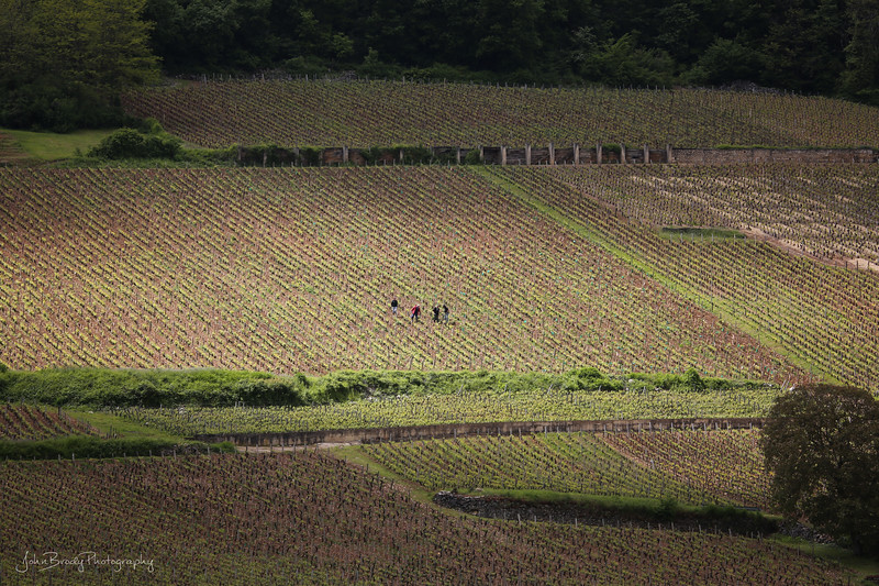 Vineyard Workers Enjoy Moment of Sun in the Countryside South Of Paris, France - JohnBrody.com / John Brody Photography