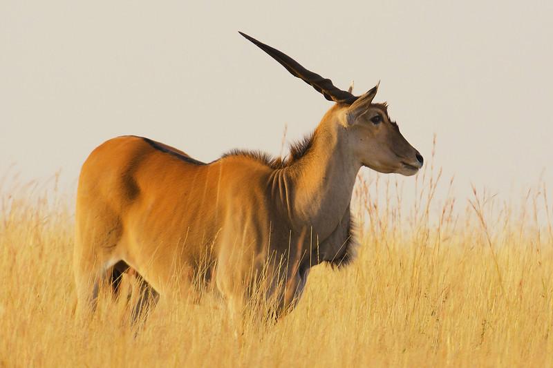Elan, Masai Mara Kenya