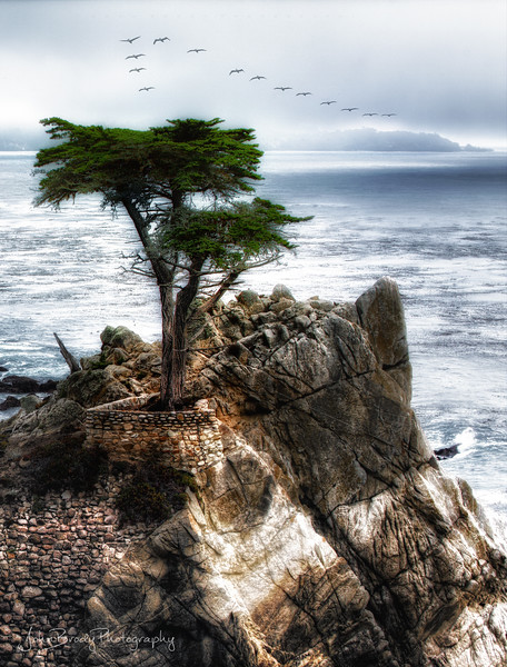 Lone Cypress Seascape with Pelican Formation  - Carmel California. The rain storm brought out pelican formations by the hundreds  -  JohnBrody.com / John Brody Photography