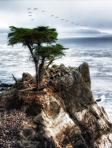 Lone Cypress Seascape with Pelican Formation  - Carmel California. The rain storm brought out pelican formations by the hundreds,    JohnBrody.com / John Brody Photography