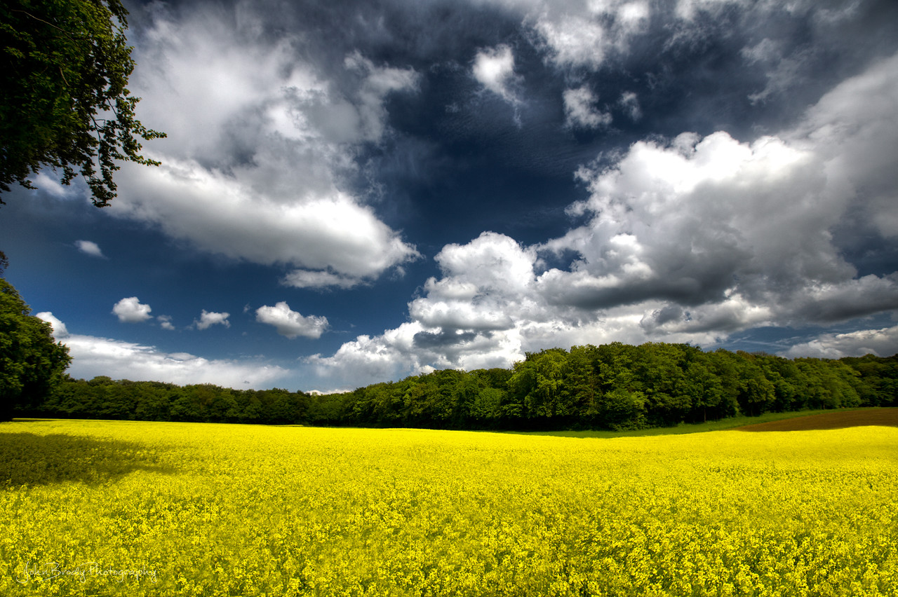 Yellow Fields Under Cloud Cover in Luxembourg near the Roman Ruins... Actually, was standing ON the ruins while shooting this scene, and the view won my interest. I guess I'll just have to go back again to shoot the ruins :)   - JohnBrody.com / John Brody Photography