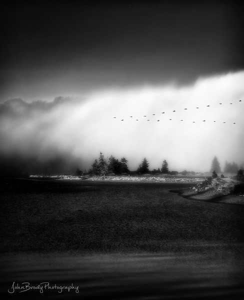 Pelicans Over Sand Bar Fog Bank - Whiffing Spit - Vancouver Island British Columbia --- John Brody Photography - JohnBrody.com