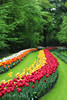 Keukenhof Forest was one of my favorite locations on the trip.  Also known as the Garden of Europe, is one of the world's largest flower gardens, situated in Lisse, South Holland, Netherlands.  A stunning site, It's filled with lakes, creeks and millions of tulips all under a Lush forrest canopy. Keukenhof is only open eight weeks each year and, in that time, welcomes 800,000 visitors. Plan ahead, but don't miss it !