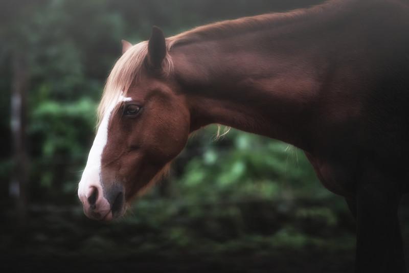 horse at Duplooy's