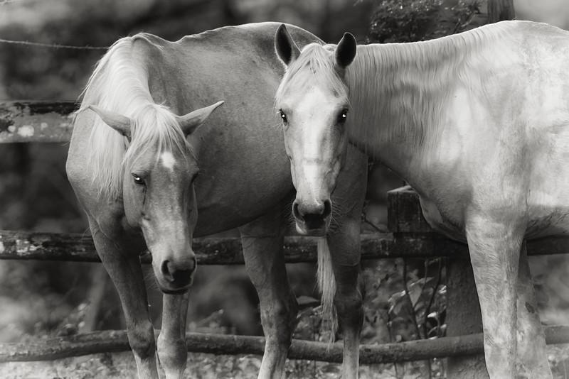horses at Duplooy's