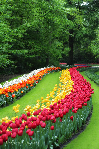 Tulip Trail in Holland - A rainy day at Keukenhof Gardens near Amsterdam. The rain would stop for a few minutes now and then and I'd shoot the rain soaked flower rows and beautiful tree canopy. Miles of tulip trails, lakes and forest  - JohnBrody.com / John Brody Photography