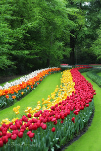 Tulip Trail in Holland  - JohnBrody.com / John Brody Photography