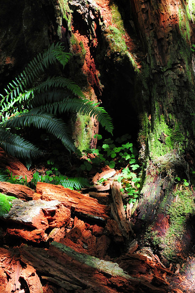 Hoh Rain Forest, Olympic Peninsula, Washington