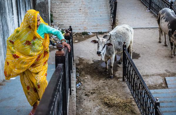 Old woman and the Kamadhenu