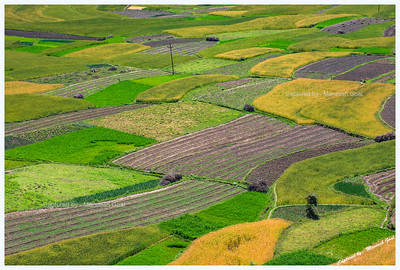 Colourful fields en route Jalori Pass