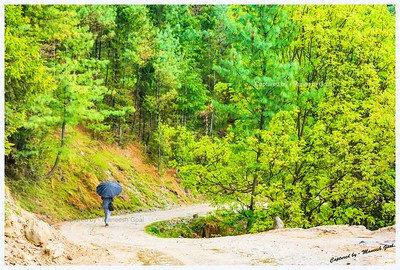 Gorgeous place for a walk, despite the rains. Bahu - Gada Gushaini road.