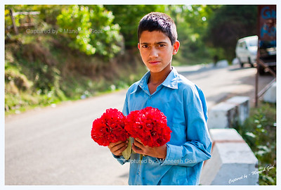 Himachali lad selling rhododendron flowers @ Dhanaulti Eco Park