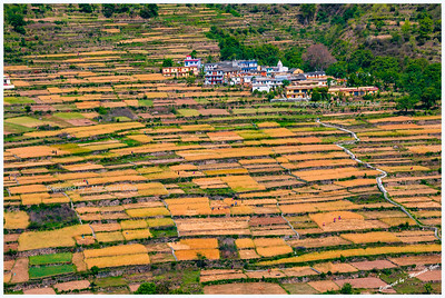 Fields near Tehri