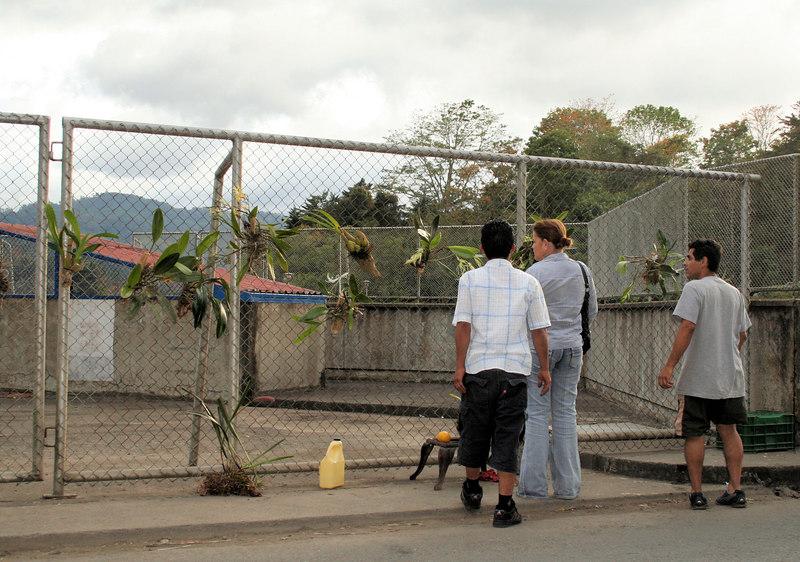 Street vendors selling Orchid plants.<br /> <br /> Vendedores de Orquideas.