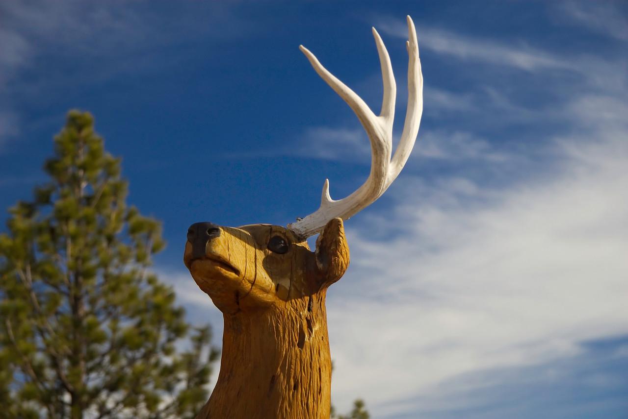 Hi deer.