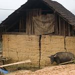 Hmong House 0478