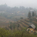 Terraced rice fields -0485