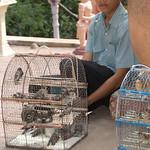 Wat Phnom-4954