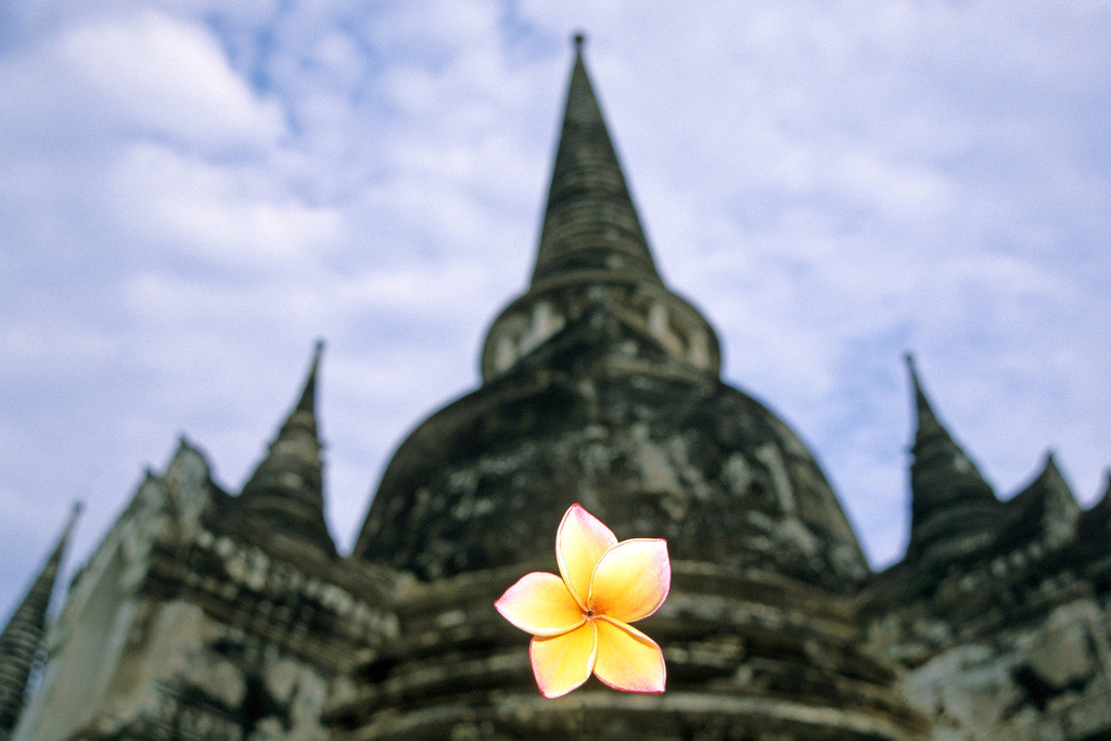 Ayuthaya temple ruins with local flower, Thailand