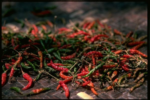 Thai chilies drying, Chiang Dao, Thailand
