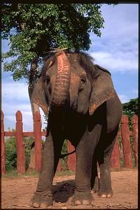 Ayuthaya, Elephant Krawl ranch, Thailand