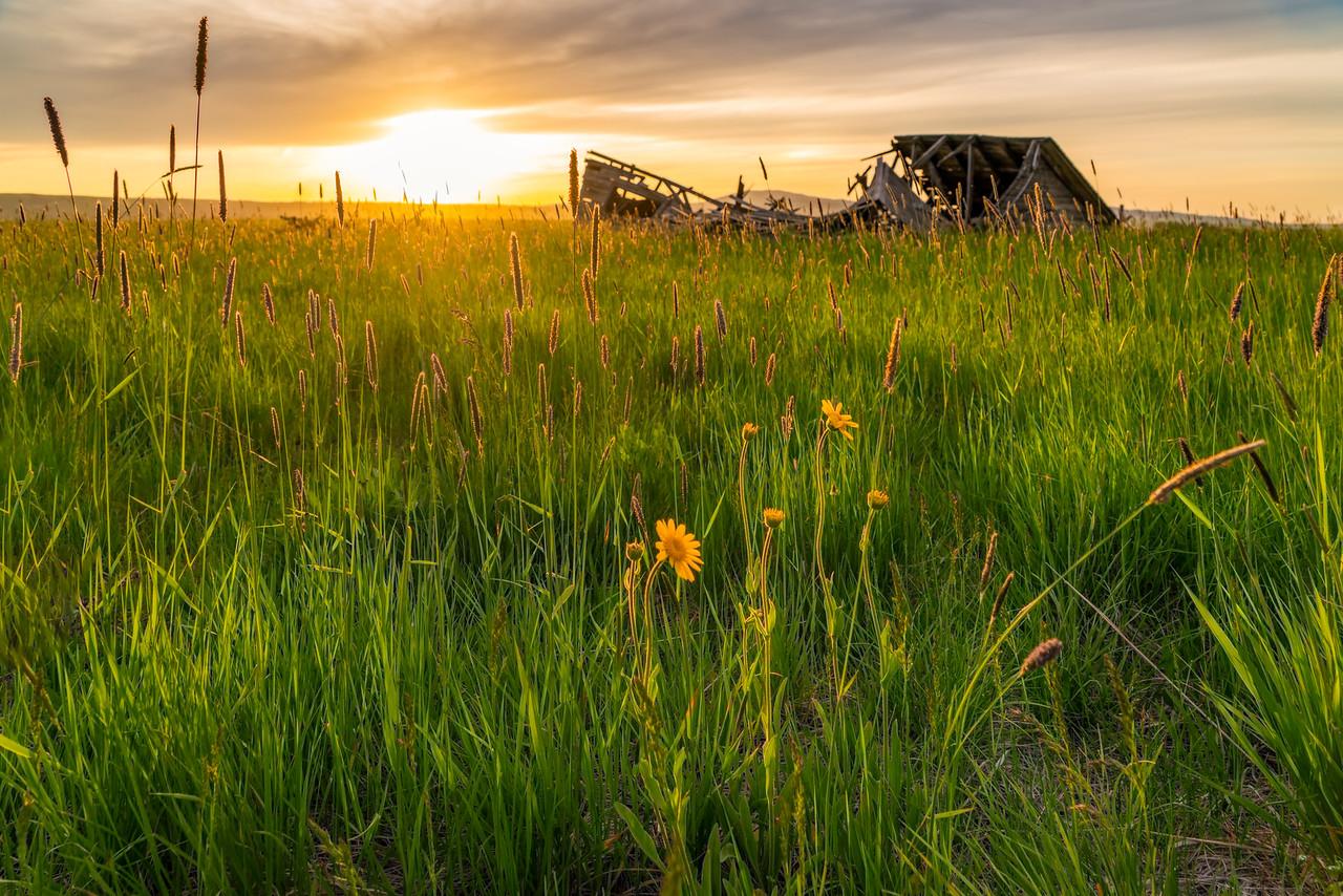golden light before sunset backlighting flowers