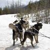 Fernie Dog Sled Ride