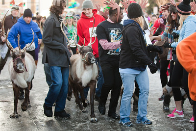 Running of the Reindeer at the 2013 Fur Rondy in Anchorage