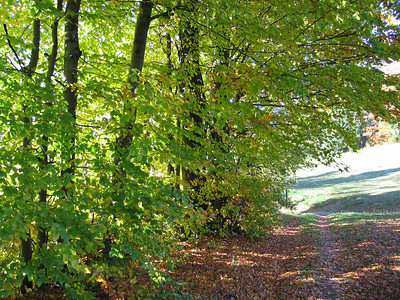 Dinsdag wandeling naar top Ochsenkopf