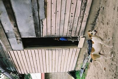 Peeking out