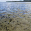 A mangrove sprouting out of the beach