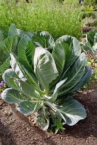 In the vegetable garden
