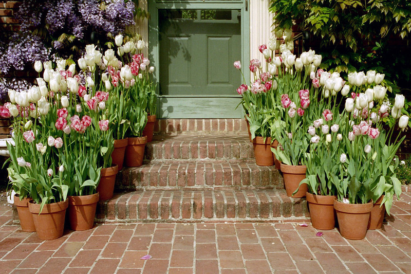 Garden house steps