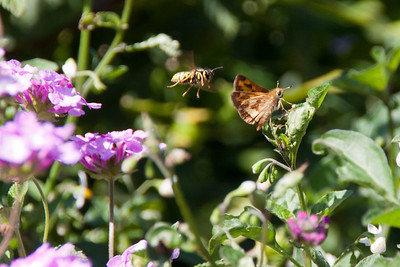 Bees and butterflies abounded in the gardens.