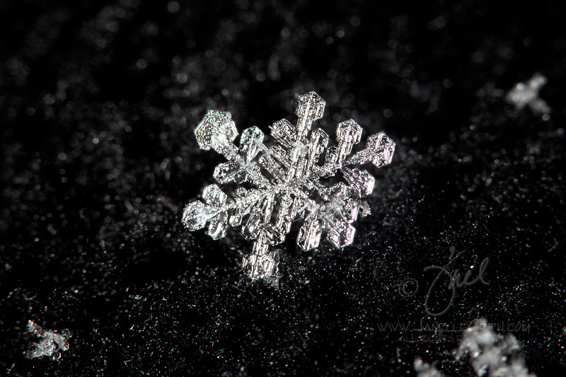 Complex Snowflake. ©2021. Janelle Orth