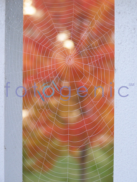 Fall foilage as seen through a spider web, Glen Allen, Virginia