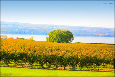Wagner Vineyards, Cayuga Lake NY