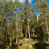 Pyhä-Luosto National Park