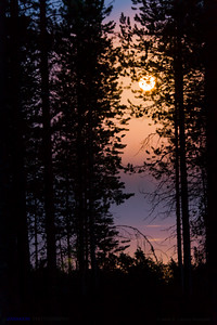 Yellow moon and taiga forest.   Hossänjarvi, Oulu. Finland.