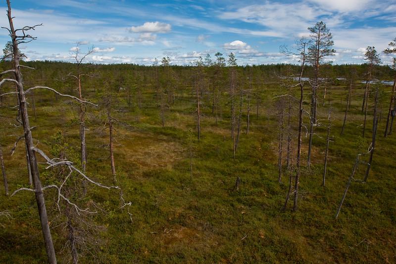 Tunturiaapa trail in Pyhä-Luosto National Park