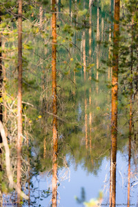 Reflections in the lakes of Hossa,  Oulu (2). Finland.